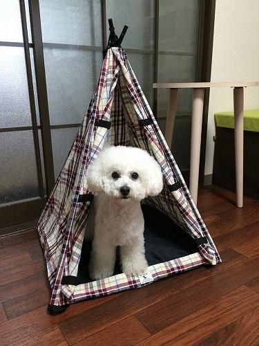 わんこテント