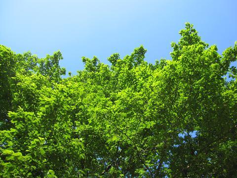 木々の緑と青い空