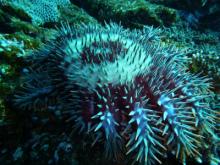 珊瑚の女王 海日記