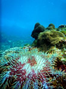 $珊瑚の女王 海日記