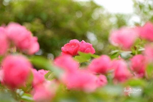 DSC_0070_20150526012934d3a.jpg