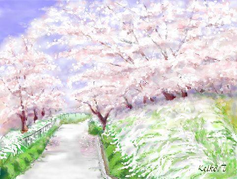 sakuranamiki-b.jpg