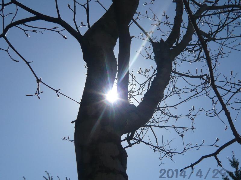 4-29太陽