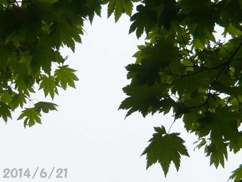 霧雨6月21日