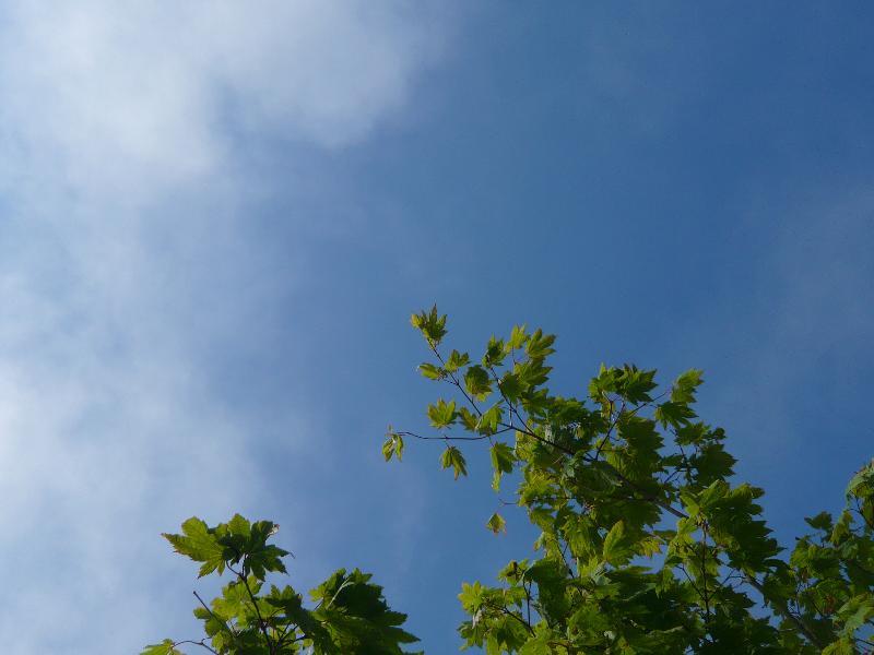 雲の流れ6月26日