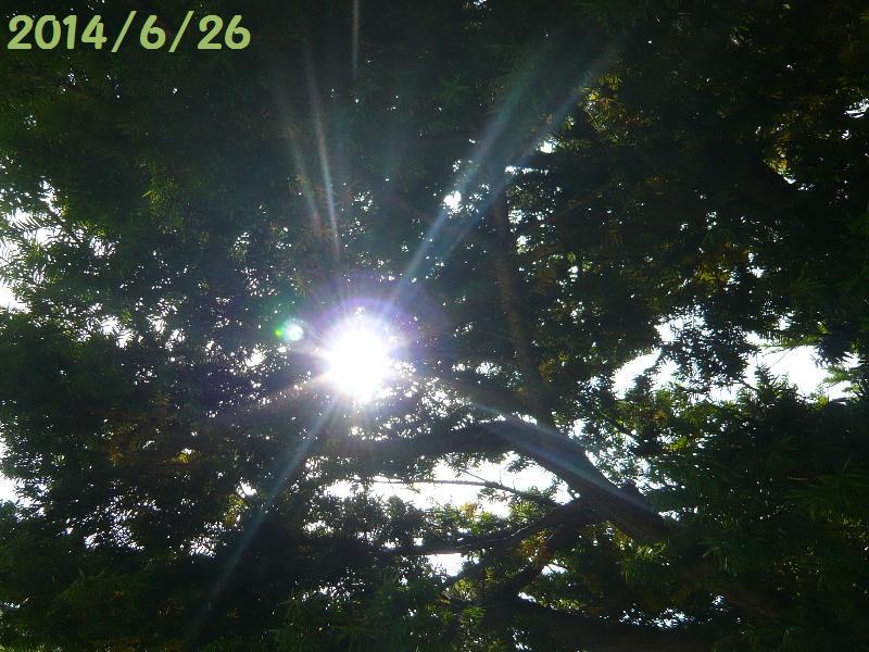 木洩れ日6月26日