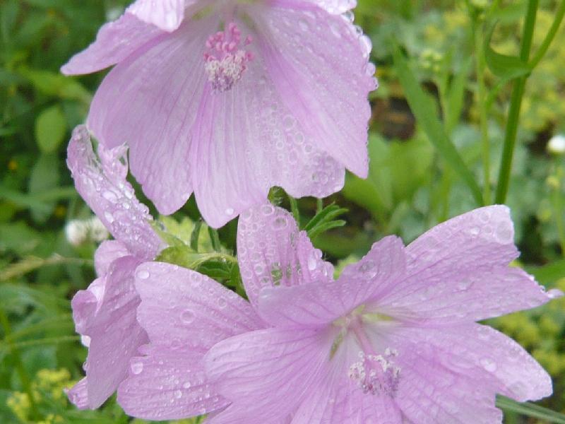 可愛い花628