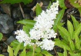 白い花6月28日
