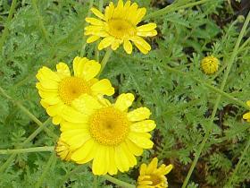 黄色い花6月28日