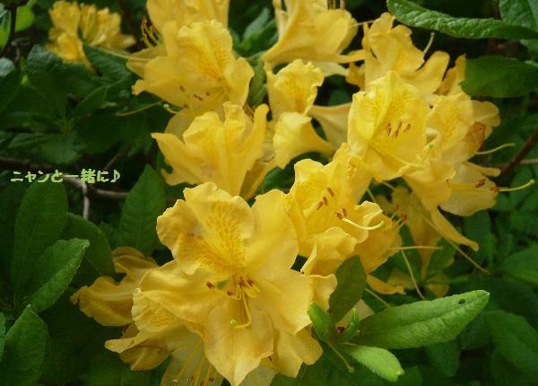 黄色060215