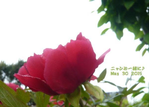 kyounosora053015.jpg