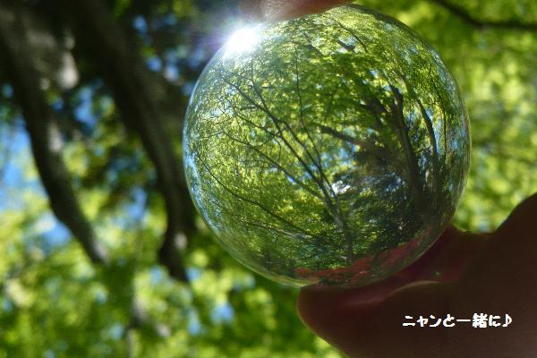 midohika0531.jpg