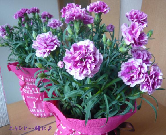 murasaki0512.jpg