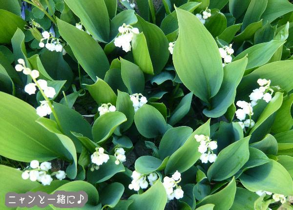 suzu052115g.jpg