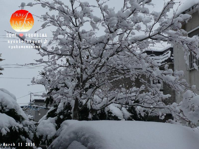 yukinoki03112015.jpg