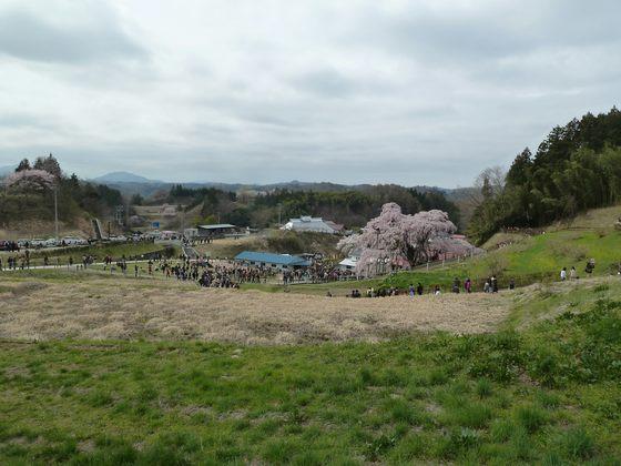 多くの観光客で賑わう三春の滝桜周辺