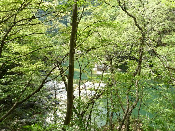 新緑の龍王峡