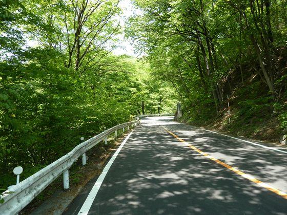 気持ちの良い緑の道が続く碓氷峠