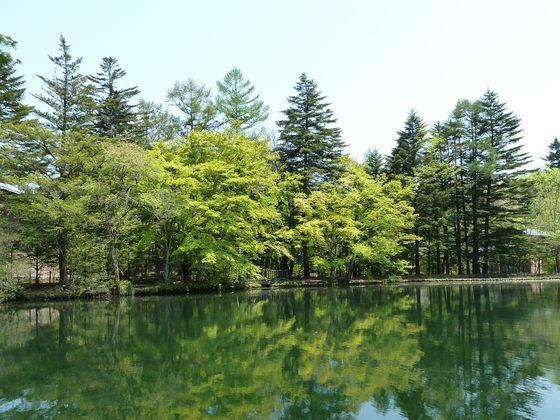 水面×新緑