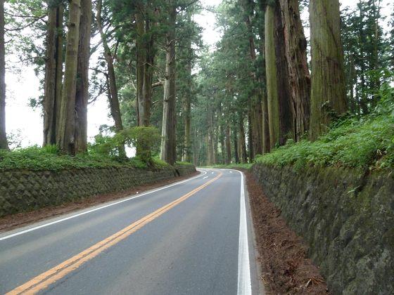 杉並木が続く国道119号線