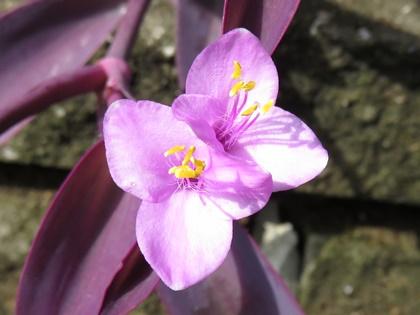 紫御殿9月 (1)