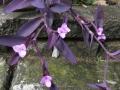 紫御殿9月 (2)