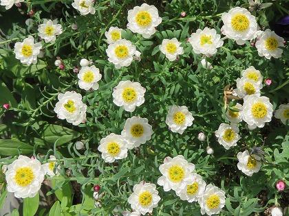 花かんざし (1)