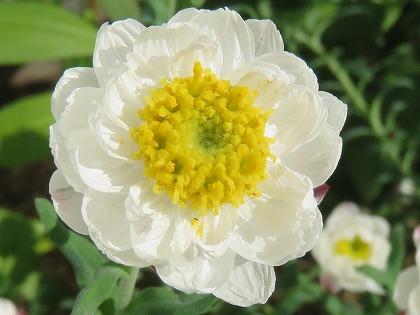 花かんざし (2)