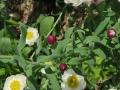 花かんざし (5)