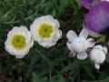 花かんざし (9)