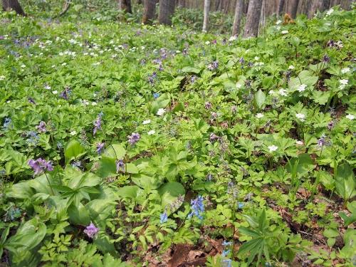 img2015-04-30-Otokoyama06.jpg