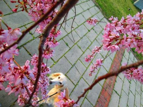 春真近の雪原遊び11