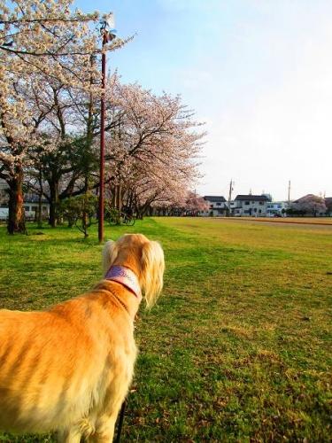春真近の雪原遊び12