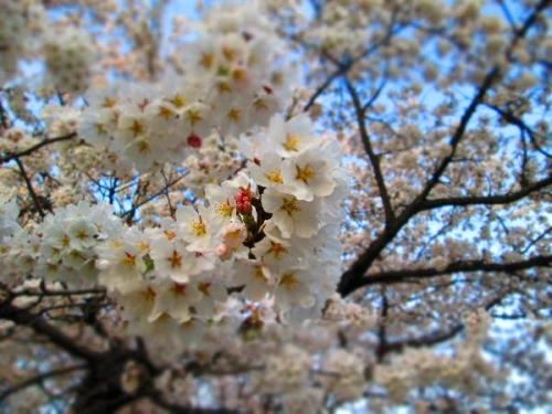 春真近の雪原遊び16