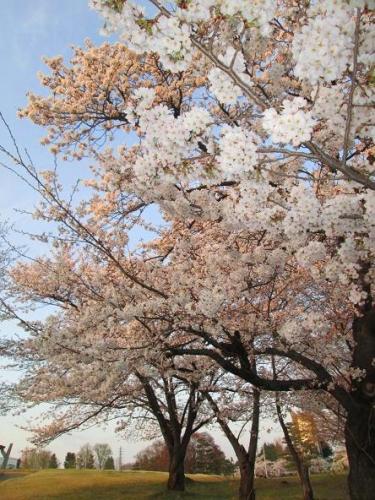 春真近の雪原遊び17