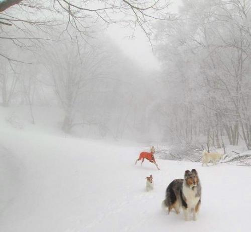 春真近の雪原遊び1