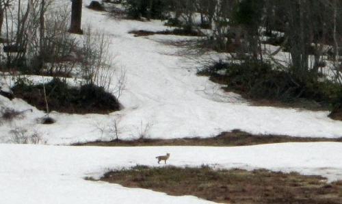 春真近の雪原遊び21