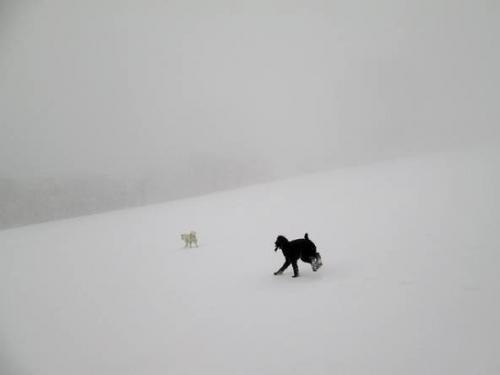 春真近の雪原遊び4