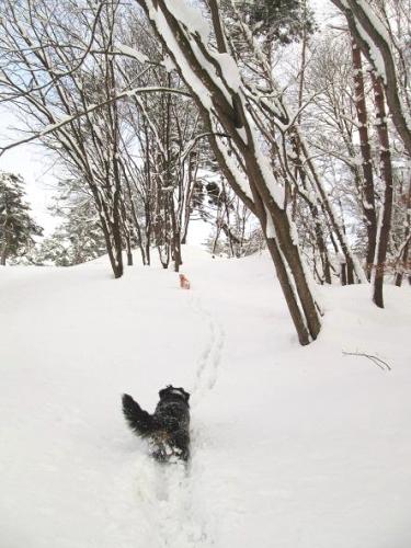 新雪と共に6