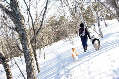 白樺の雪原へ13