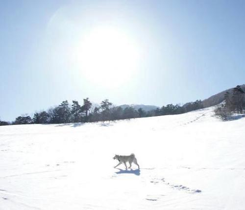 白樺の雪原へ14