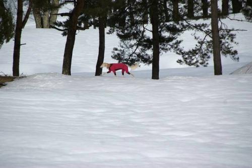 大雪の町12