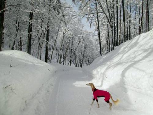 大雪の町3