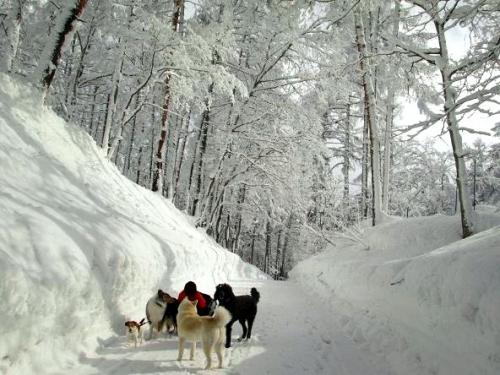 大雪の町4