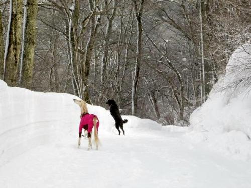 大雪の町6