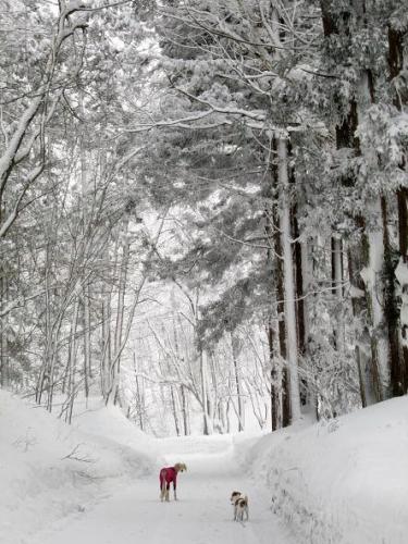 大雪の町7