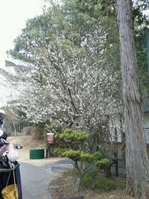 扶桑CC3H27.3.18