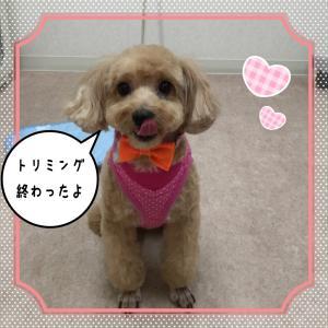 空ちゃん_convert_20150718235530