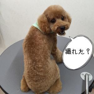ちょびさん_convert_20150723221714