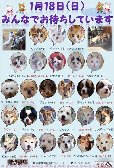 ALMA ティアハイム 1月18日 参加犬猫一覧
